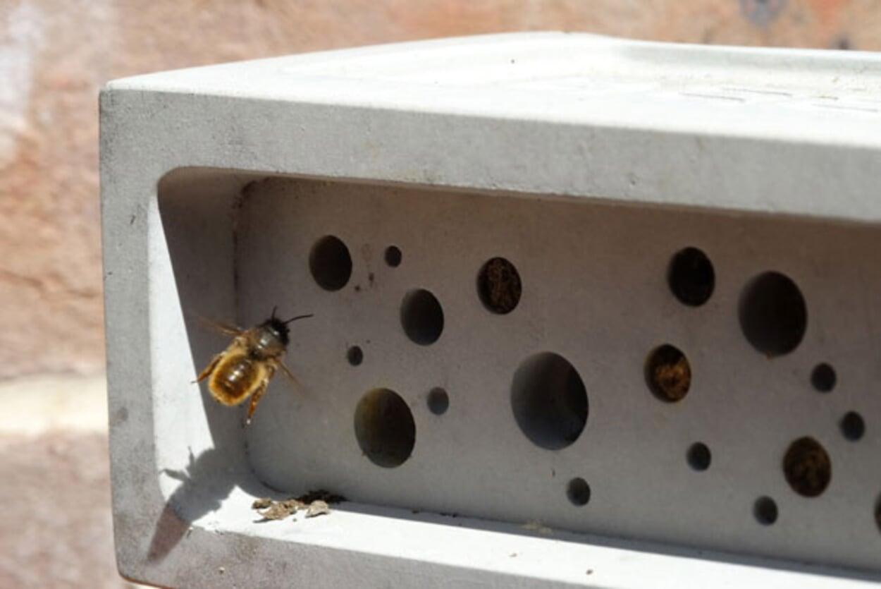 Nisthilfe für Bienen