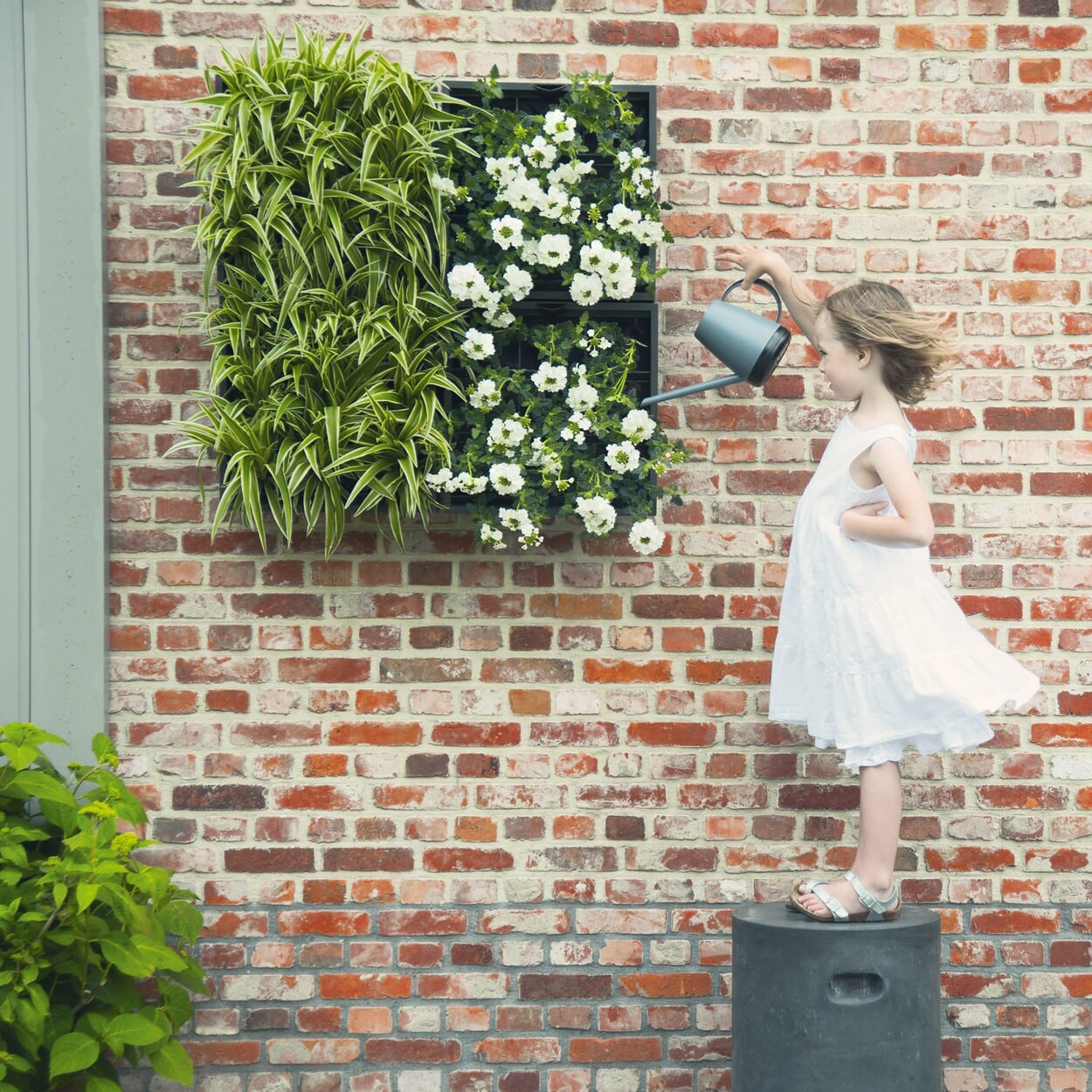 Pflanzelement zur Wandbefestigung