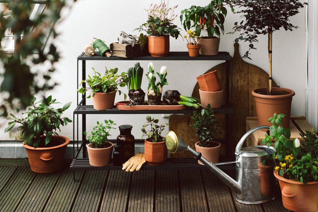 Gärtnern auf dem Balkon