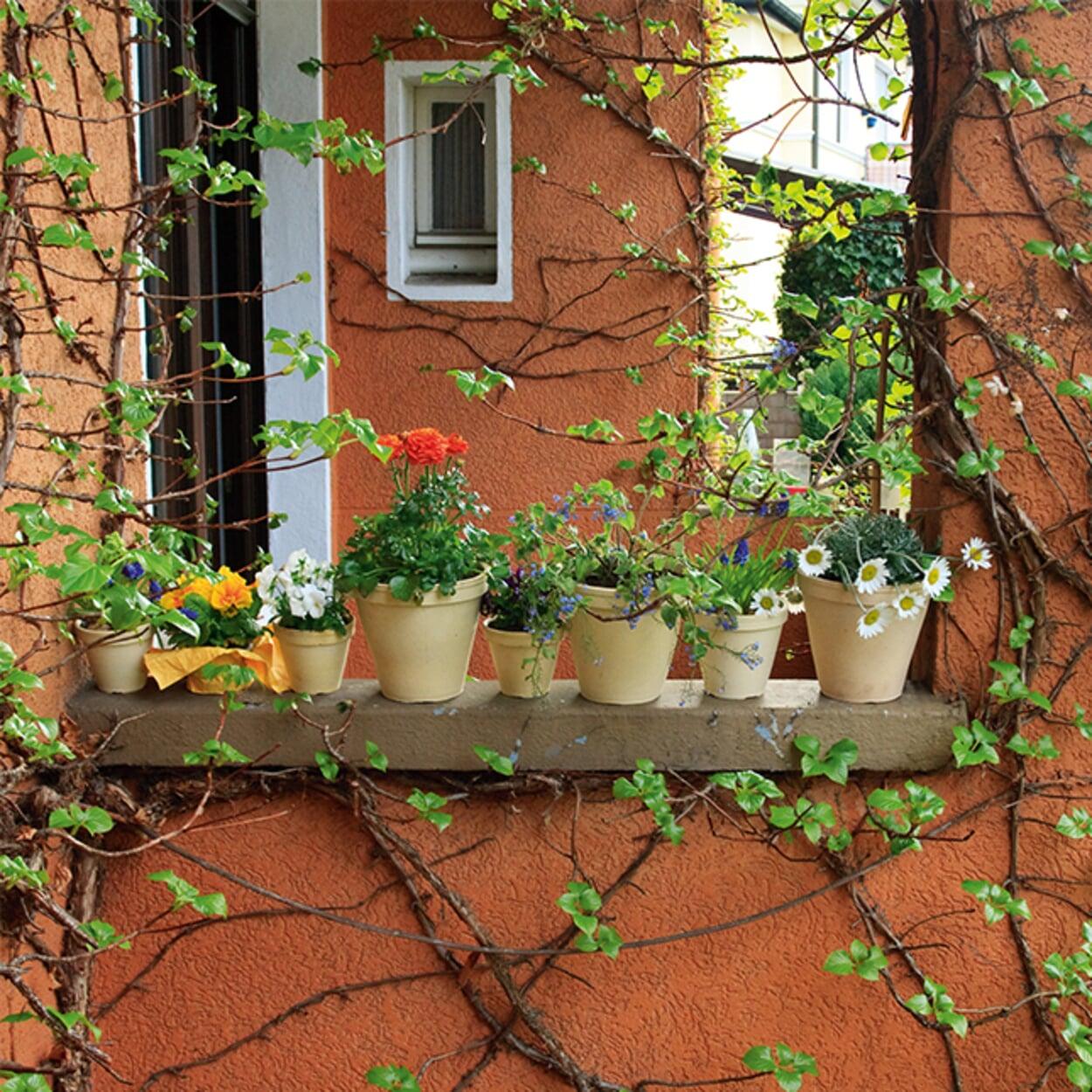Balkon- und Zimmergarten April