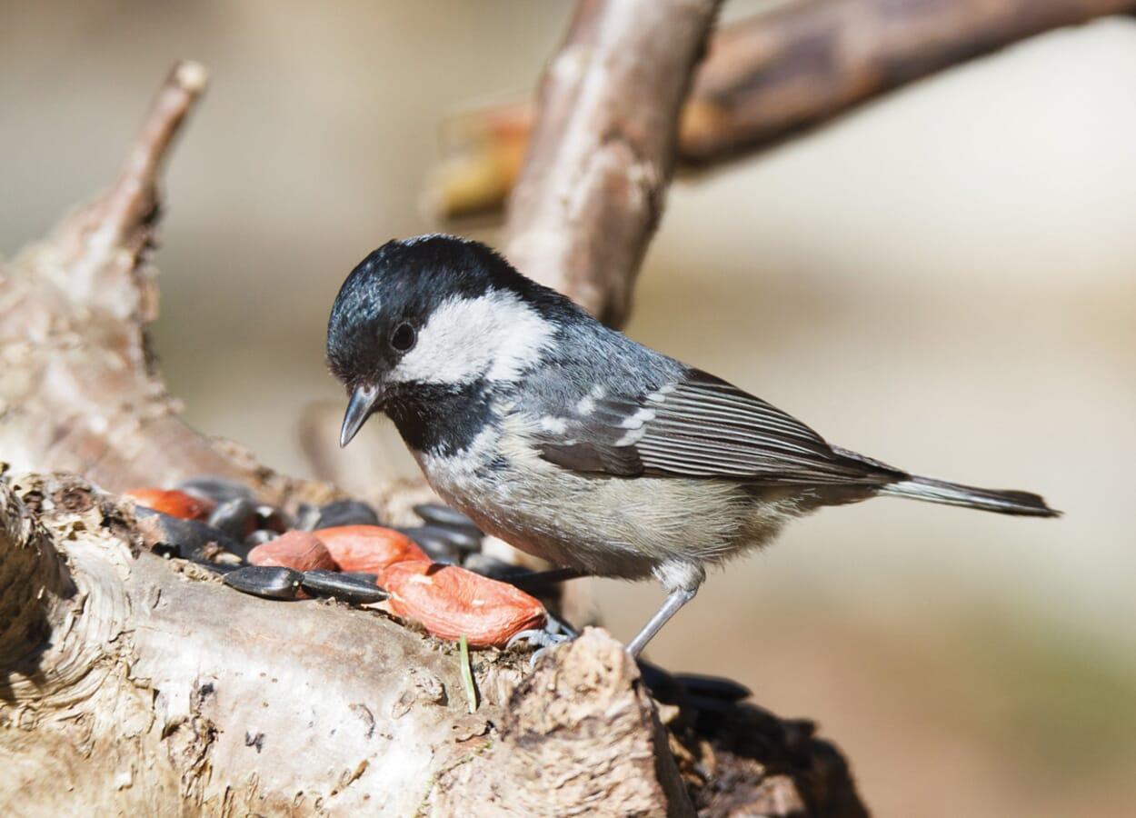 Vogelgerechte Gartengestaltung