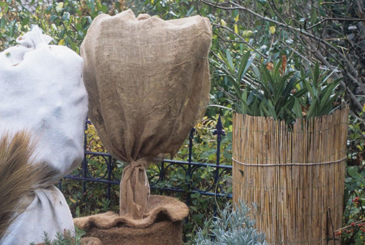Kübelpflanzen schützen