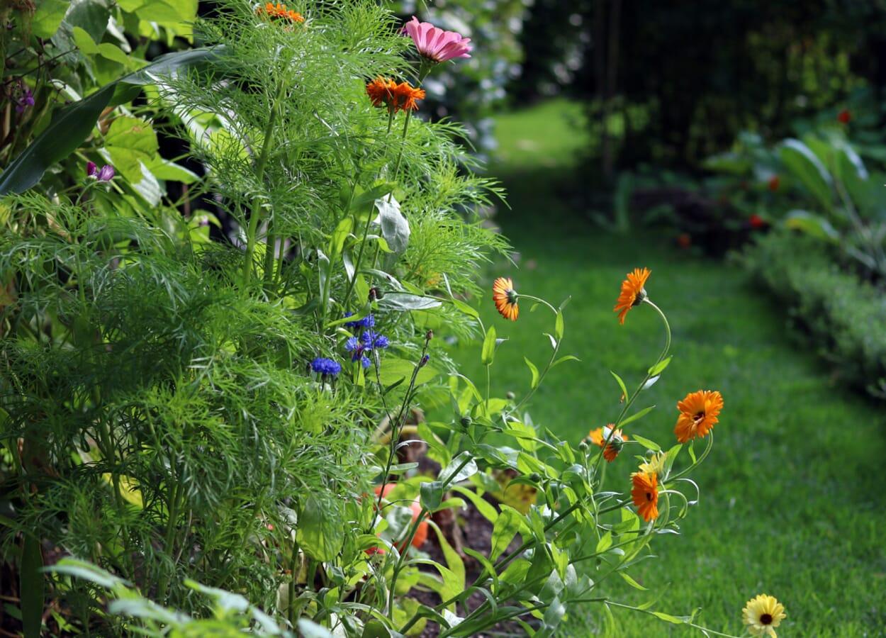 Blumensämereien