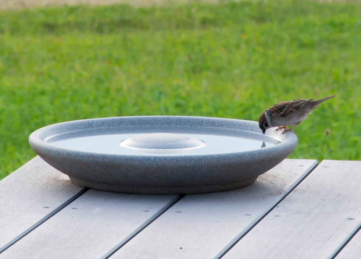 Vogeltränke aufstellen