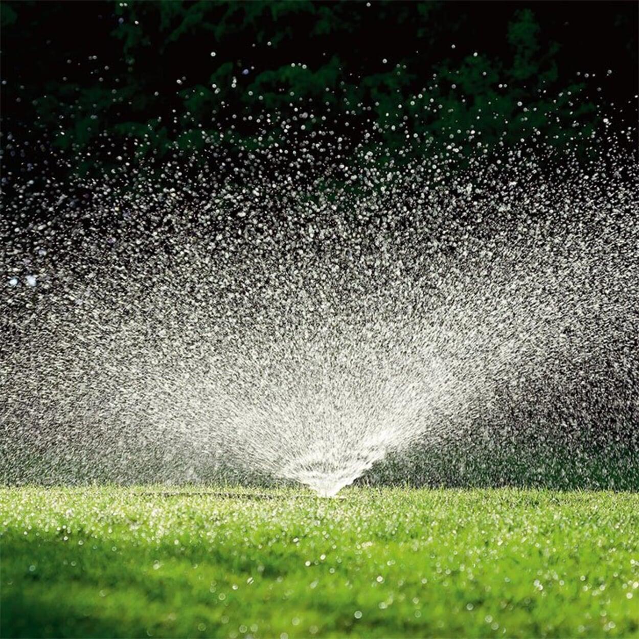Gleichmäßig wässern, am besten mit einem Regner