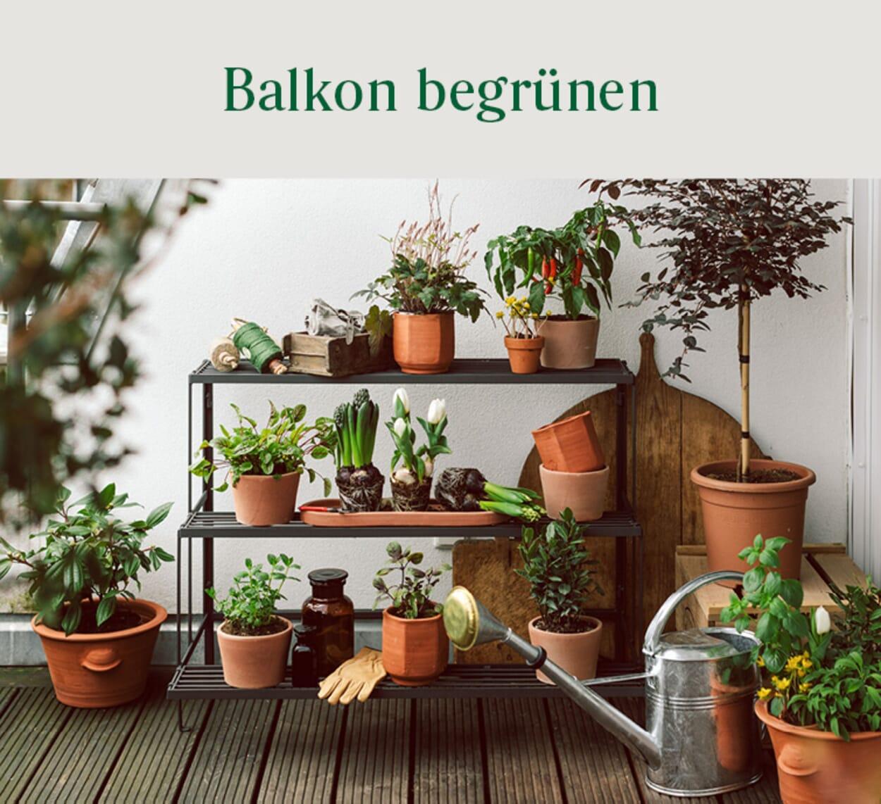 Balkon begrünen