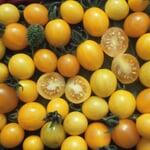 Gemüsesamen 'Wildtomaten'