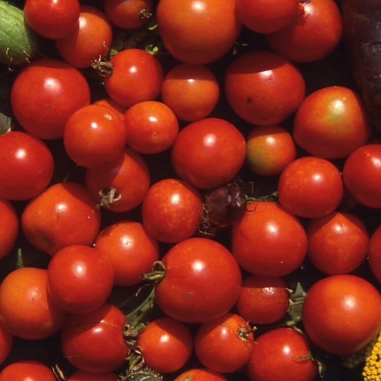 Gemüsesamen 'Tomaten für den Balkon'