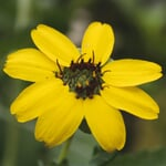 Saatgut 'Gemüse und Blumen für Kinder'