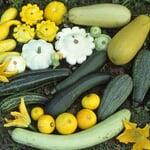 Gemüsesamen 'Kürbisgewächse'