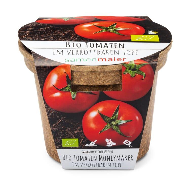 Gemüsesamen Aussaatset, Tomate Moneymaker