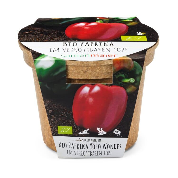 Gemüsesamen Aussaatset, Paprika Yolo Wonder