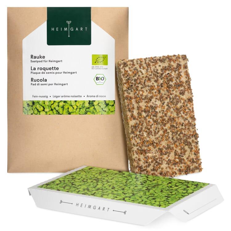 Microgreens-Saatpad, Rauke