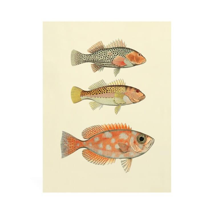 Reprint Fish of the South Seas, 3 Fish