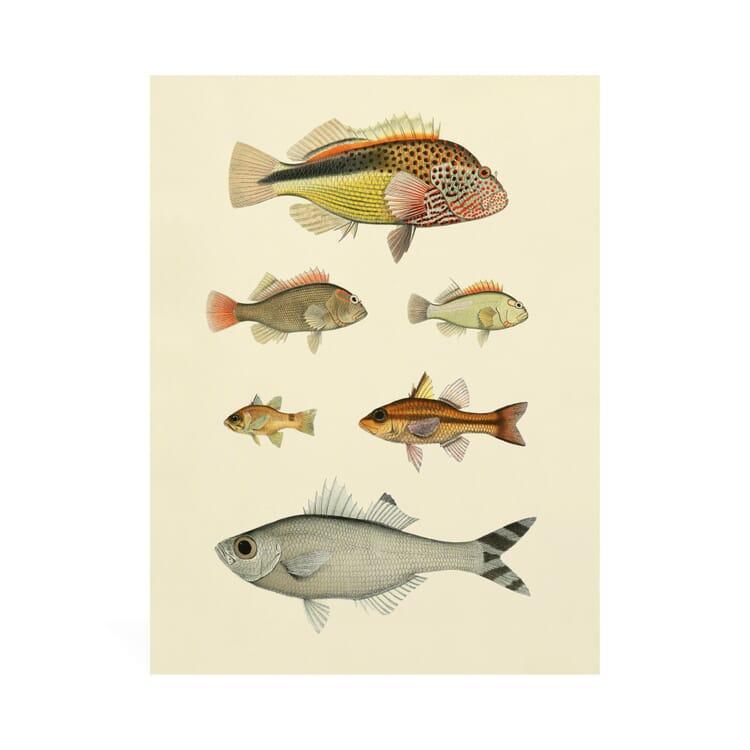 Druck Fische