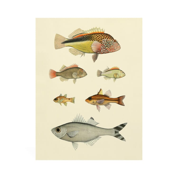 Reprint Fish of the South Seas, 6 Fish