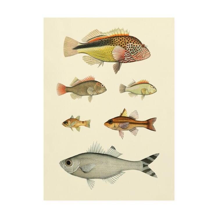 Druck Fische Mehr Fische 50 x 70 cm