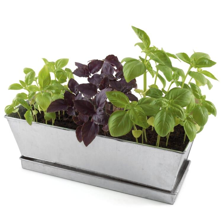 Gemüsesamen 'Balkongarten Basilikum'