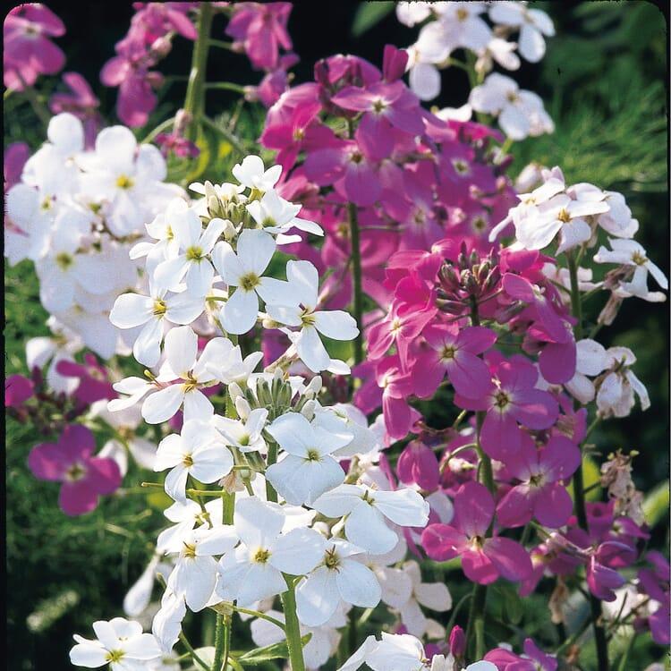 Blumensamen 'Duftende Blumen'