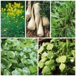Gemüsesamen 'Winterkräuter'