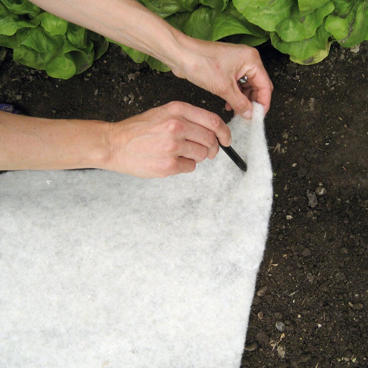 Kälteschutz aus Schafwolle