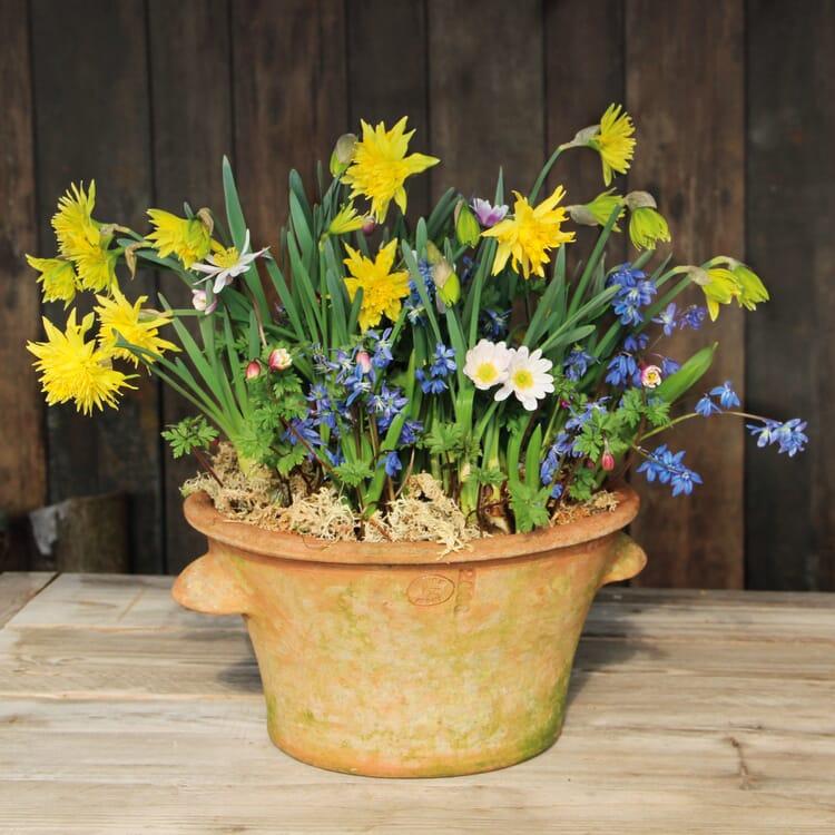 Blumenzwiebeln für Töpfe Mischung 2