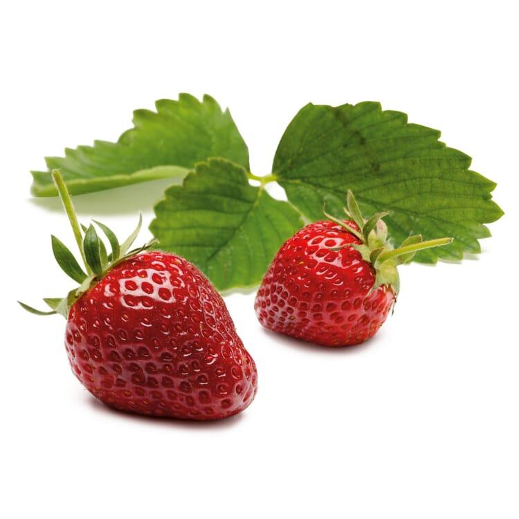 Erdbeer-Probierpaket No. 1