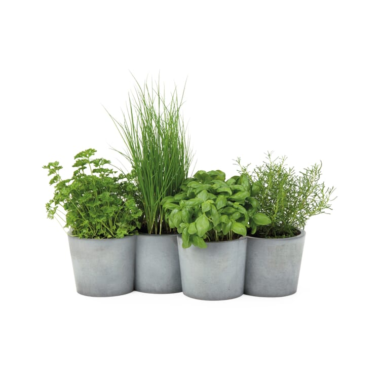 "Herb Pots in a Closed Row ""Potpot"""
