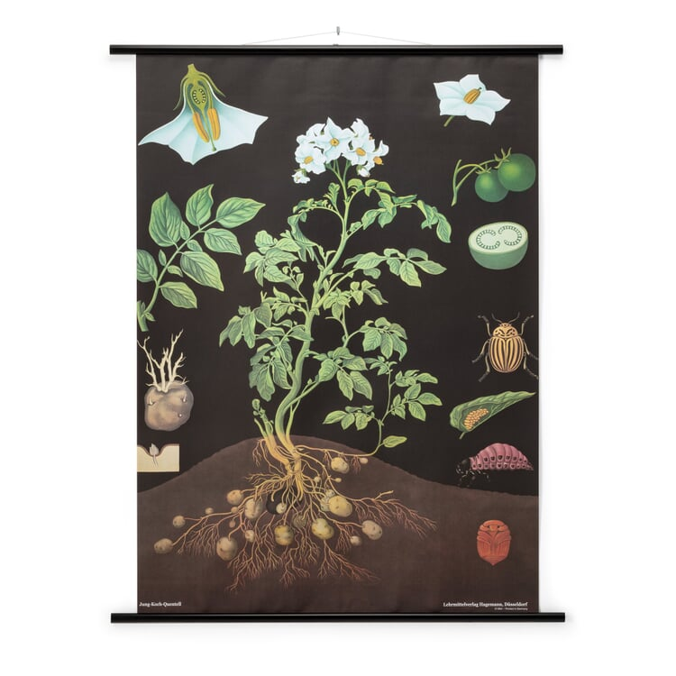 School Wall Map Printed Canvas Potato