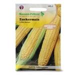 Gemüsesaatgut Zuckermais 'Golden Bantam'