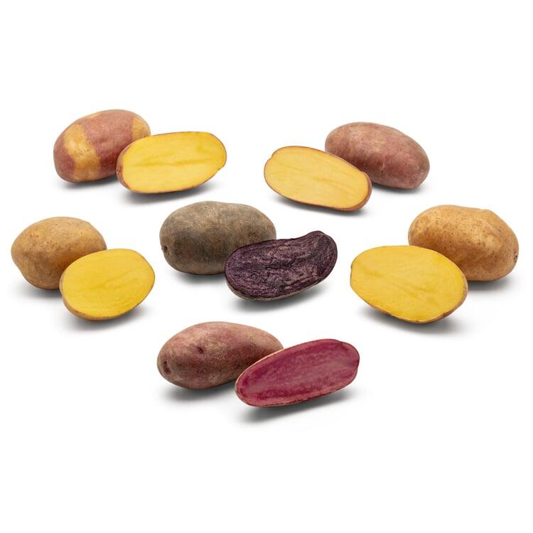 Kartoffelraritäten 2021 neue Sorten